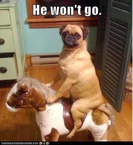 confused,dogs,horsey,no,no go,not real,puggle,riding,toys