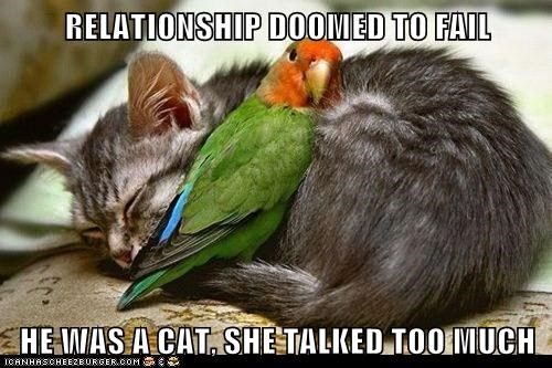 RELATIONSHIP DOOMED TO FAIL  HE WAS A CAT, SHE TALKED TOO MUCH
