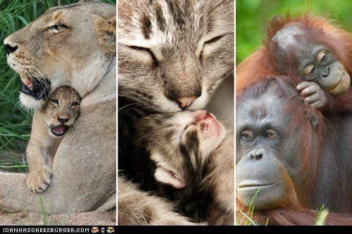 15 Baby Animals With Their Mommies