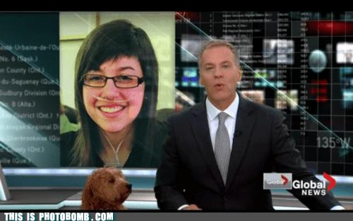 Animal Bomb,animals,dogs,news,wtf