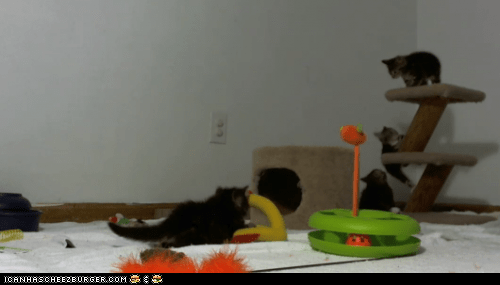 Kitten Kam: A Live Stream of KITTENS!