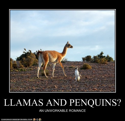 LLAMAS AND PENQUINS?