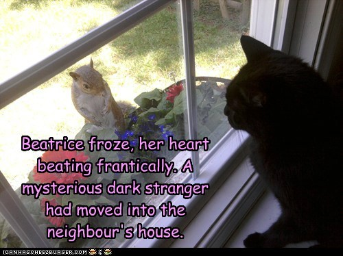 black cat,mysterious stranger,squirrel,window