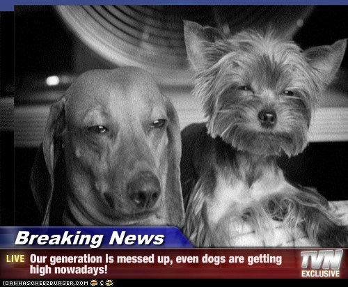 Breaking News - Our generation is messed up, even dogs are getting high nowadays!