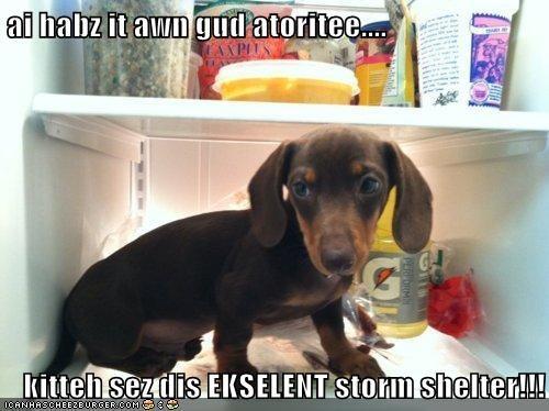 ai habz it awn gud atoritee....  kitteh sez dis EKSELENT storm shelter!!!