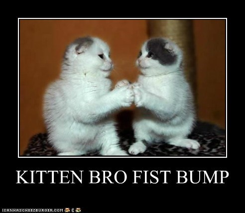 KITTEN BRO FIST BUMP