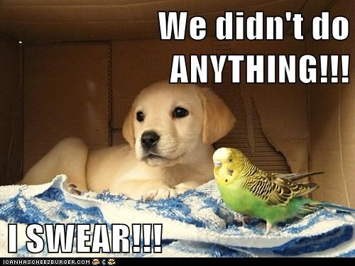 We didn't do ANYTHING!!!  I SWEAR!!!