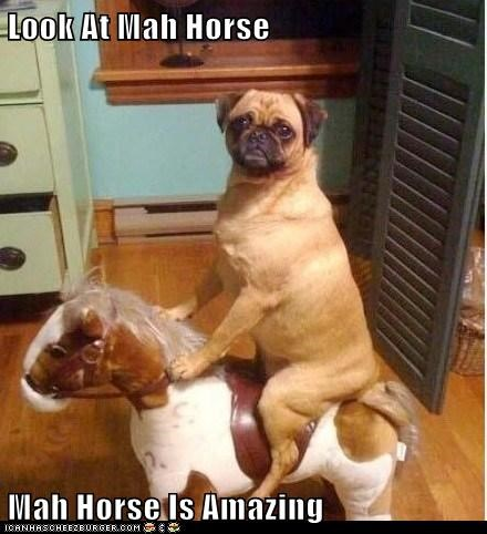 Look At Mah Horse  Mah Horse Is Amazing