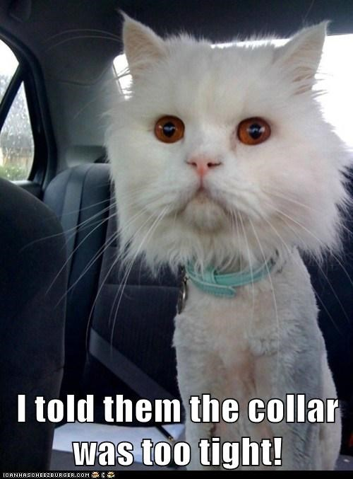 I told them the collar was too tight!