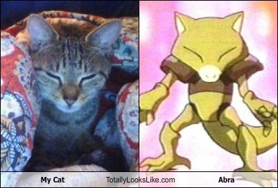 My Cat Totally Looks Like Abra (Pokemon)