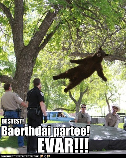 bears,political pictures,trampolines