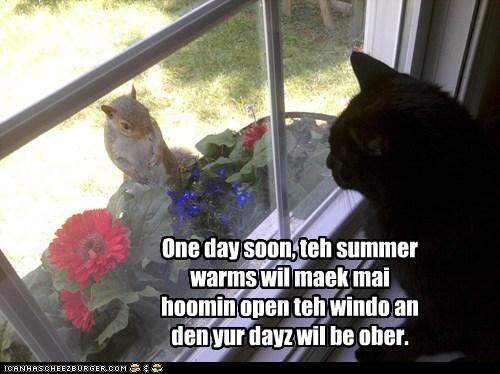 cat,eating,open,over,SOON,squirrel,summer,threat,window
