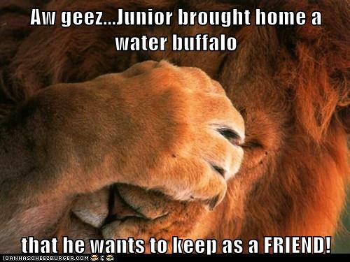 Aw geez...Junior brought home a water buffalo  that he wants to keep as a FRIEND!