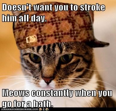 Animal Memes: Scumbag Cat - But Not With Those Wet Hands
