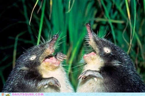 beady eyes,creepy,grass,mole,vole,whatsit