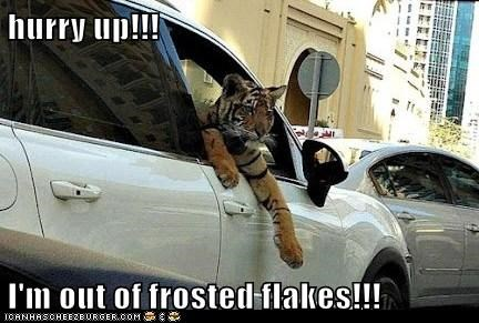 car,frosted flakes,hurry up,out,running out,tiger