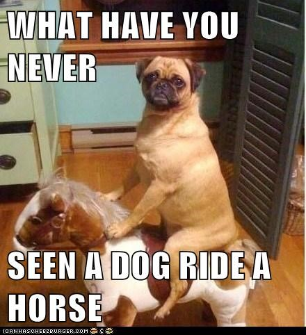 WHAT HAVE YOU NEVER  SEEN A DOG RIDE A HORSE