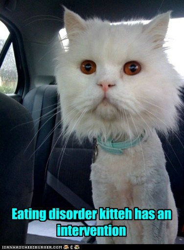 Eating disorder kitteh has an intervention