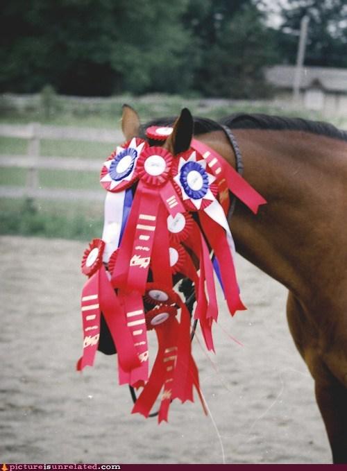 award,horse,ribbon,winner,winning,wtf