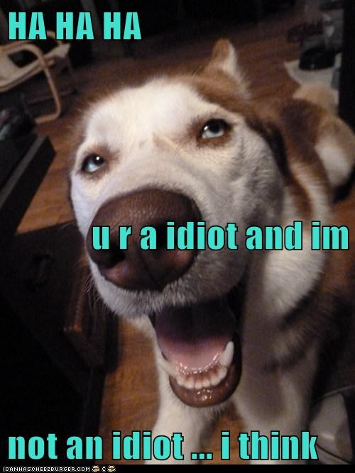 HA HA HA u r a idiot and im  not an idiot ... i think