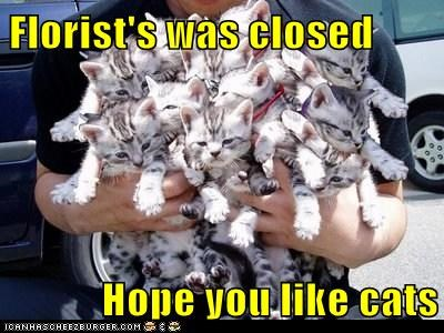 Lolcats: Florist's was closed