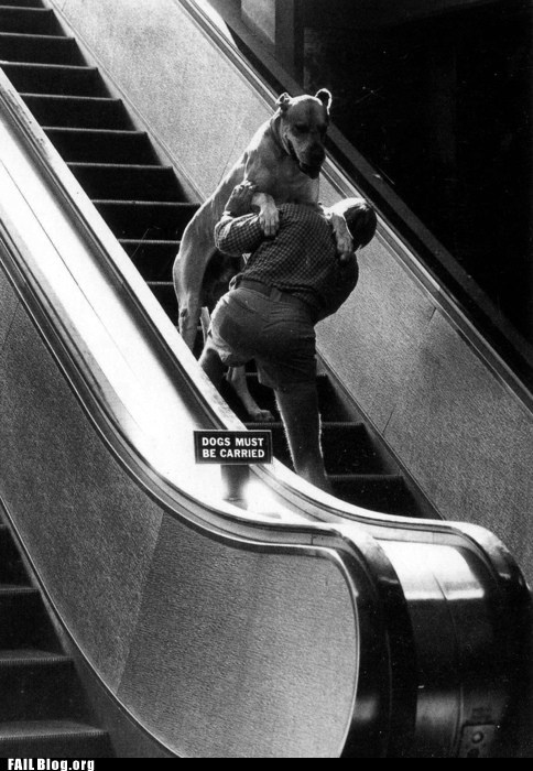 dogs must be carried,escalator,heavy dog