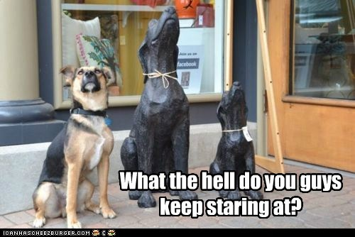 dogs,German Shepard,statues,what are you looking at