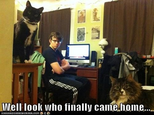 captions,Cats,curfew,disappointed,disapproving,glaring,home,late,lolcats,roommate,Staring,walk of shame