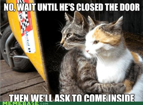 Cats,close,door,inside,Memes