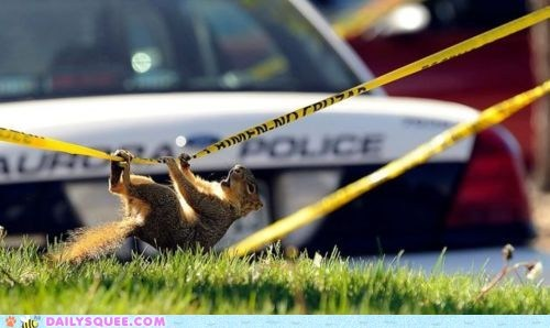 climbing,crime scene,grass,police,police tape,squee,squirrel,squirrels