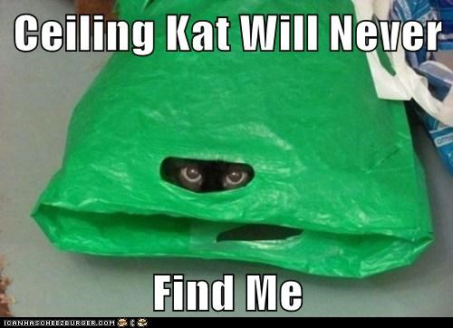 Ceiling Kat Will Never  Find Me