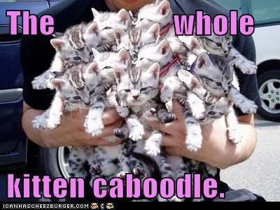 The                   whole  kitten caboodle.