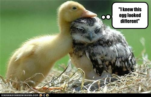 Animal Capshunz: Well, Ain't This Just Ducky