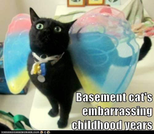 Basement cat's embarrassing