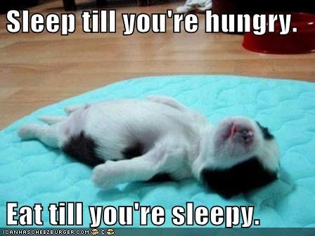 best of the week,cyclical,dogs,eat,Hall of Fame,hungry,lazy,puppies,puppy,sleep,sleepy,tiny,what breed