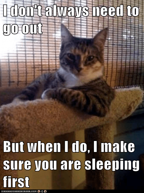 Animal Memes: The Most Interesting Cat in the World - No, It Can't Wait