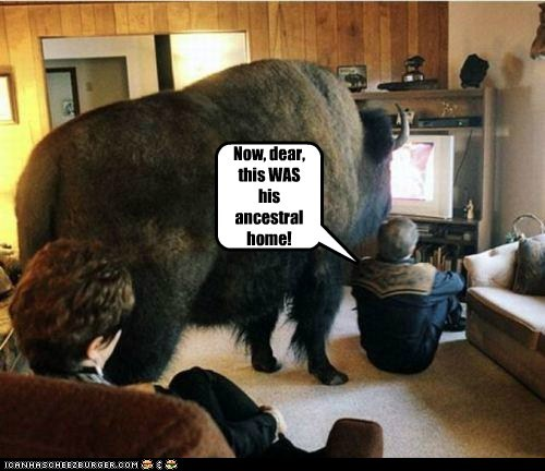 ancestors,buffalo,home,ignore,tolerance,watching TV
