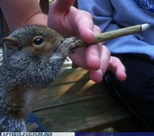 Crunk Critters: Meet Spliffy the Squirrel