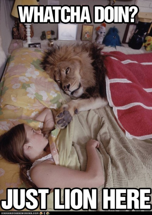 beds,big cats,lion,lions,lying,puns,whatcha doin