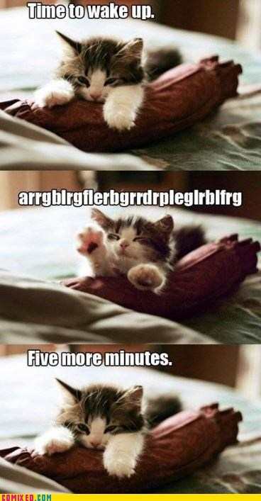 best of week,cat,cute,i know that feel,sleepy,the internets