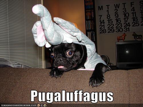 best of the week,costume,dogs,elephant,elephants,Hall of Fame,portmanteaus,pug,pugs,snuffleupagus