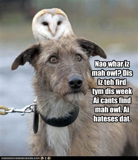dogs,find,knowing,lost,obvious,Owl,right behind you