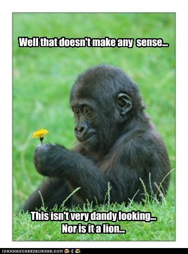 confused,dandelion,dandy,Flower,gorilla,logic,makes no sense,understand,weed