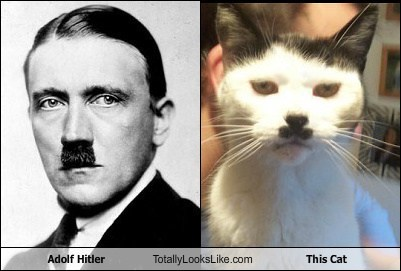 Adolf Hitler Totally Looks Like This Cat