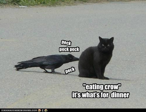 Poe!  yer dang bird is loose again...