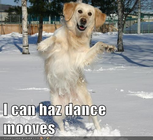 I can haz dance mooves