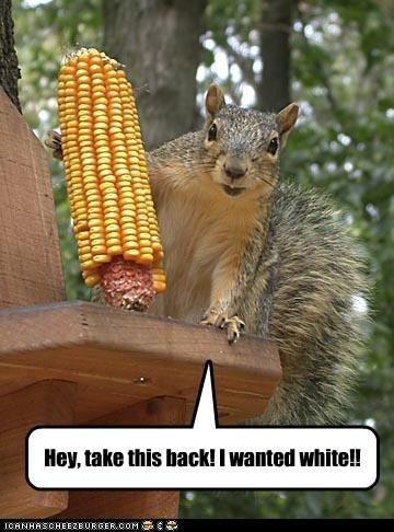 corn,eating,picky eater,service,squirrel,waiter,white corn,yellow corn