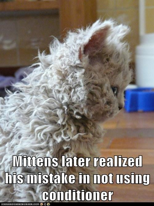 bad hair day,Cats,conditioner,curly,Fluffy,frizz,fur,fuzzy,hair,Hall of Fame,lolcats,oops,shampoo
