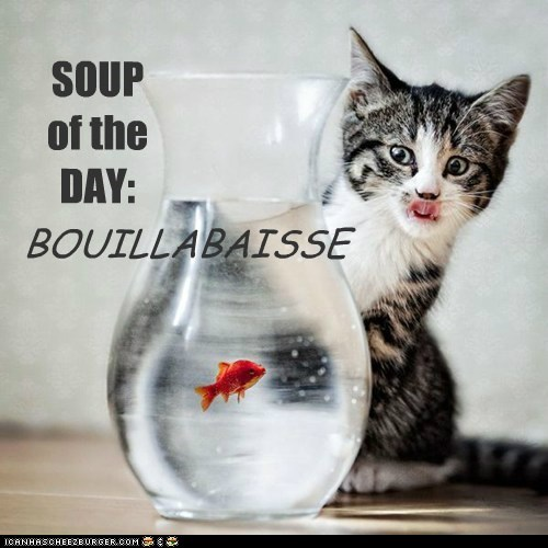 SOUP of the DAY:
