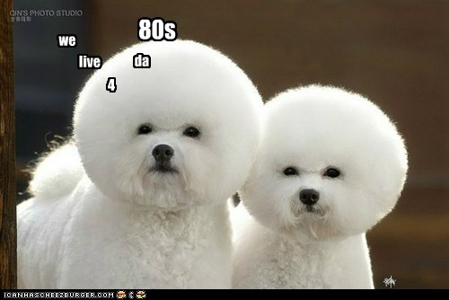 afro dogs